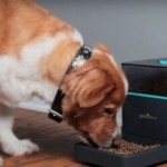 A Smartphone Gadget Pintofeed Can Feed Your Pet