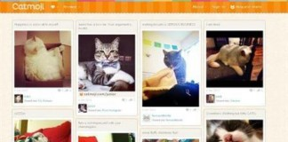 Catmoji The Pinterest of Cats