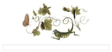 Maria Sibylla Merian Fly on Google Doodle